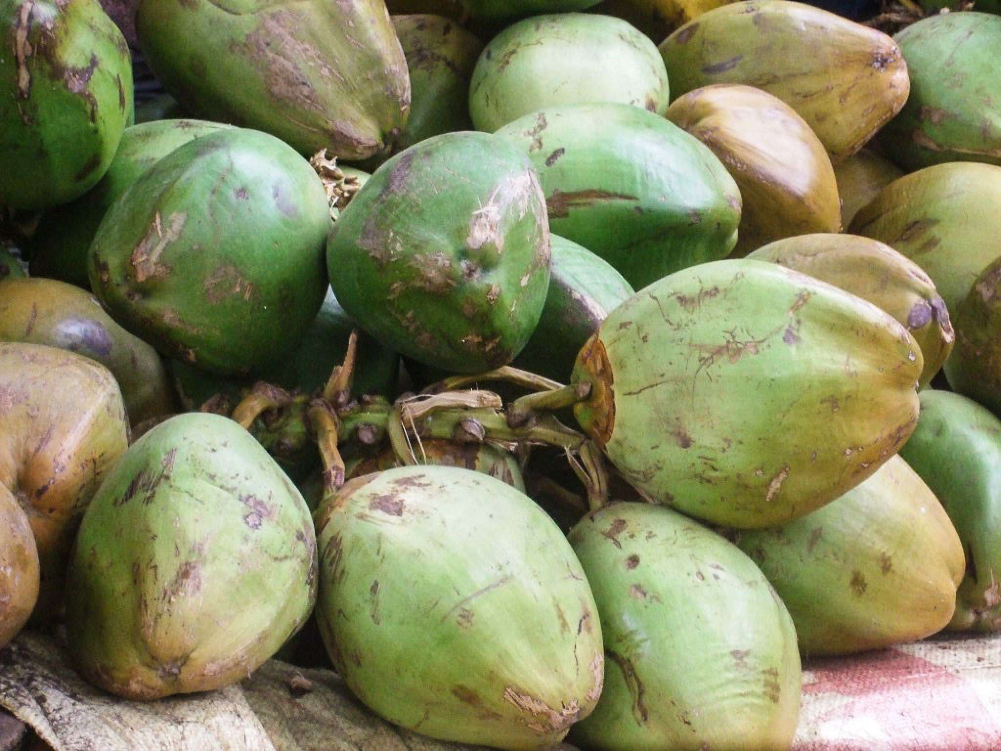 Chemical Free Coconuts